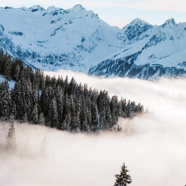 ❄️ #snow #winter #winterwonderland #skiing #austria #diedamskopf #vorarlberg #austria #mountains #mountaintop #mood #foggyday ...