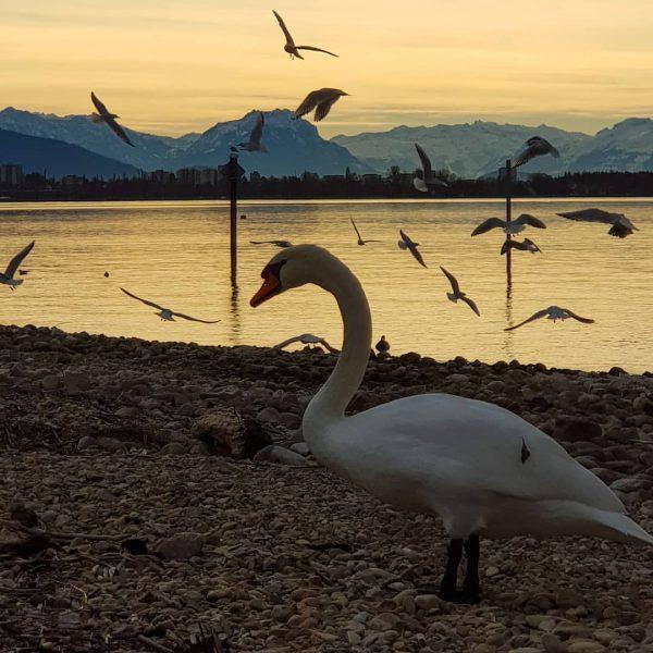 Gestern am Kaiserstrand in Lochau. Einen schönen Abend wünsch ich Euch allen # ...