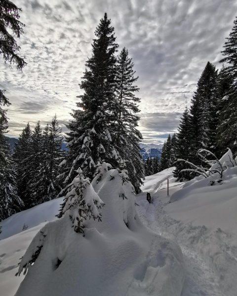 26.11.20.19 Wintermotiv vom Christberg #wald #meineheimat #christberg #winter #silbertal #österreich #montafon #bergsüchtig #landscapephotography #landscape #landscapelovers #landscape_lovers #trail...