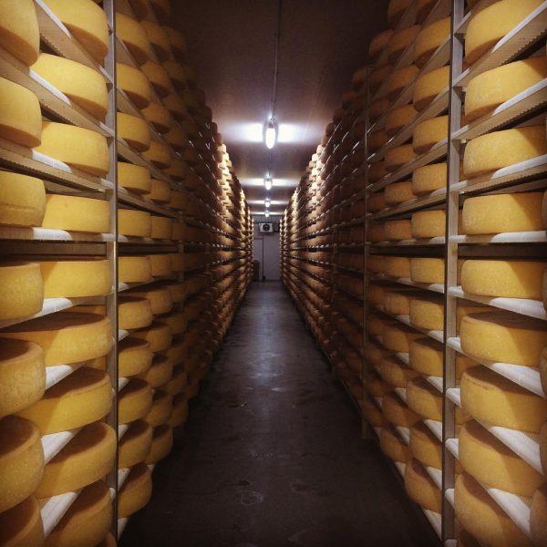 """Schon gewusst?! In unseren hauseigenen Käsekellern können knapp 10.000 Laibe """"Hittisauer Bergkäse"""" 🧀 ..."""