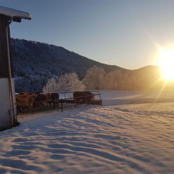 """""""Winter in Hittisau"""" Am Vormittag schneit's ❄️❄️ noch, am späteren Nachmittag bereits wieder ..."""