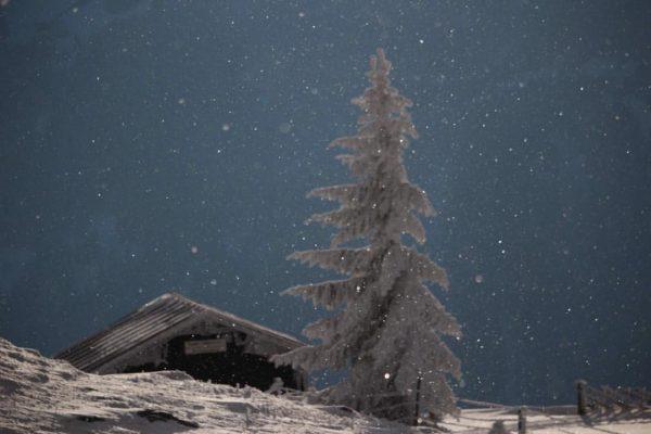 Frohe Weihnachten #weihnachten #schnee #vorarbergwandern #stille #freude #wald #berge #christmas #vorarlberg #explorevorarlberg #montafon ...
