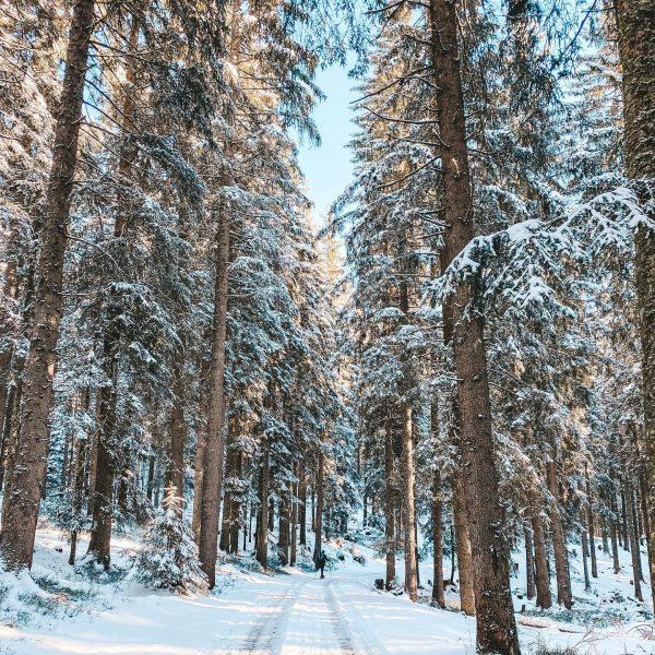 Walking in a winter wonderland ❄️ . . . . #winterwonderland #wanderlust #hiking ...