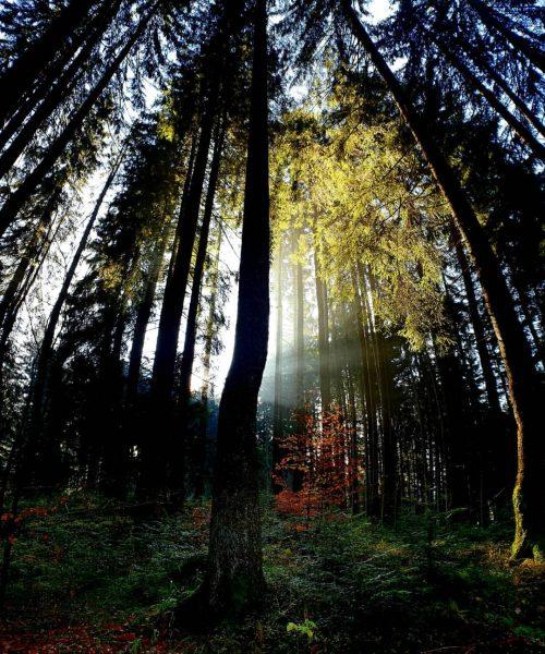 Herbstwald #götzis #wandern #farben Millrütte