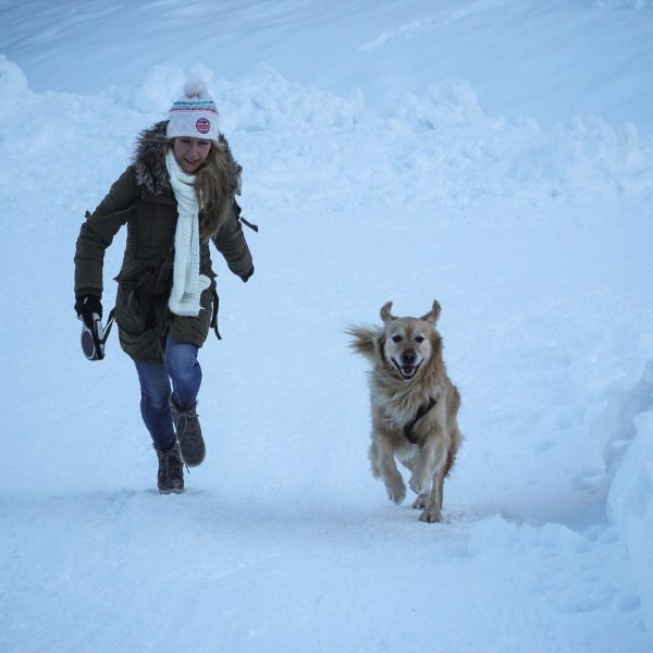 Having fun in the snow 🐕🐾❄️💕 #Kleinwalsertal #bärgunthütte #snow #winter #goldenretriever #ilovemydog #ilove_goldenretrievers ...
