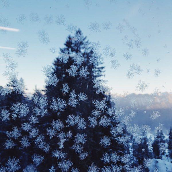 ❄️❄️ Zauberhafte Schneekristalle ❄️❄️ . . . . . #schneezauber #schneekristalle #frööd #naturelovers ...