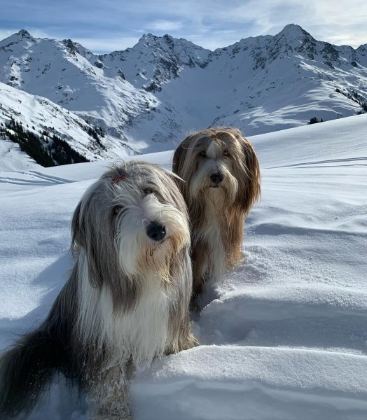 Kaiserwetter☀️☀️☀️ #sonnenkopf #sonnenkopfbahn #vorarlbergwandern #waldamarlberg #bergwandern #vorarlberg #ski #beardedcollie #beardedcolliesofinstagram #beardedcolliefriends #beardedcollieworld #beardedcollielovers ...