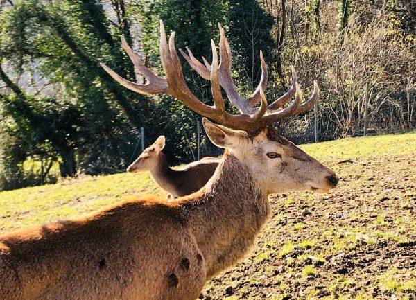 Toller Anblick heute morgen... #wildgehege #wildparkfeldkirch Wildpark-Feldkirch