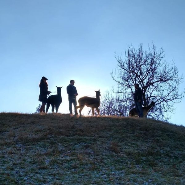 Alpaka-Trekking heute Nachmittag. www.holzmichlsalpakas.at #alpaka #holzmichlsalpakas #alpakatrekking #alpakadecke #thüringerberg #alpakawolle #feinstewolle #vorarlberg Holzmichl's ...