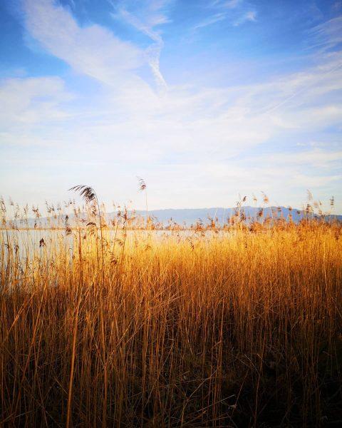 Rohrspitz Richtung Pfänder #rohrspitz #lakeofconstance #bodensee #vorarlberg #visitvorarlberg #lake #lakes #seeufer #westaustria #cloudsandsky ...