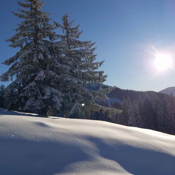 Ein Moment zum Genießen❄☀️😎 . . #vorarlberg #bregenzerwald #laterns #austria #winterwonderland #2020 #snow ...