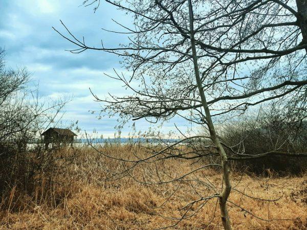 #bodenseeliebe #bregenz #ilovemylife❤️ #naturelover #gratefulheart #bodensee #nature #stillness