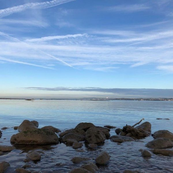 Im Winter hat das Rheindelta viel zu bieten. Auf Grund seiner Habitatvielfalt überwintern ...