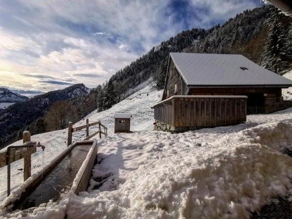 Blick auf Staufenalpe -#strongagain #staufenalpe #winter #dornbirn #österreich #berglauf #landscapephotography #landscape #landscapelovers #landscape_lovers #trail #sport #landscape_captures #mountains...