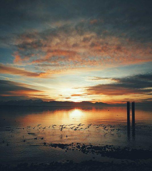 🕊️ . . . #sunset #birds #flying #sunsetlover #sonnenuntergang #lakeconstance #lake #bodensee #visitbodensee ...