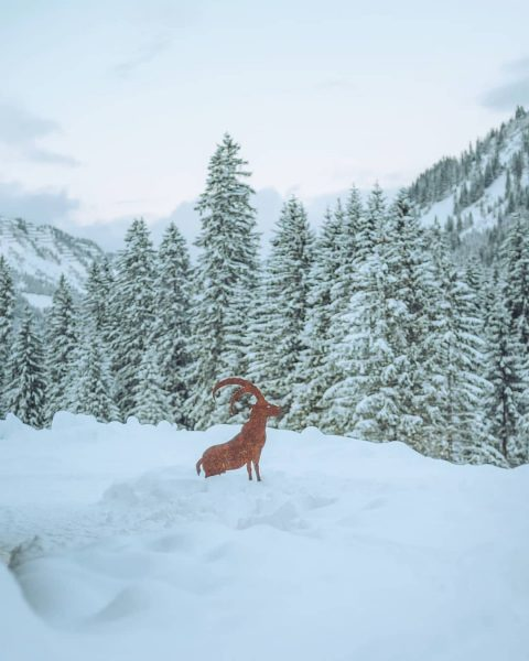 Wildlife 😁 . . . . . #kleinwalsertal #kwt #bärgunthütte #baad #vorarlberg #visitvorarlberg ...