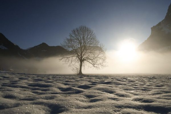 #schnee #schneelandschaft #baum #schnepfau #nebel #morgennebel