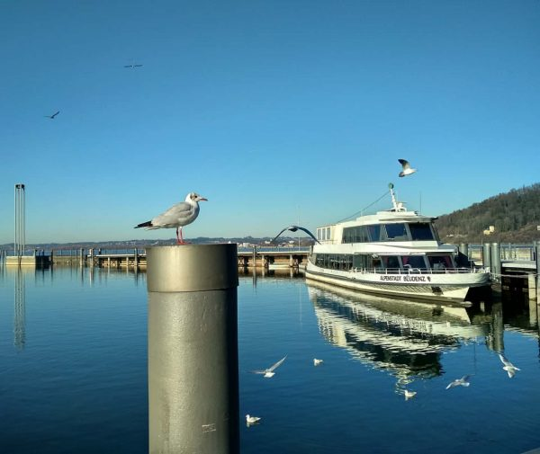 #osterreich #austria🇦🇹 #vorarlberg #bregenz #bodensee #sunnyday #lakeconstance #seagulls #boats #lakes #nature #funday #paradise ...