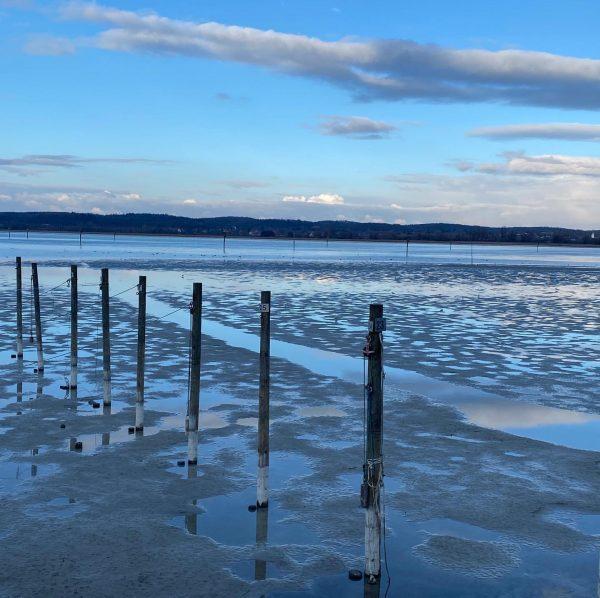 Impressionen eines wunderschönen Weekends am Bodensee. #Sturmmöwe #Silbermöwe #Birding #Bodensee #Birdwatching #Vögel #Wintergäste ...