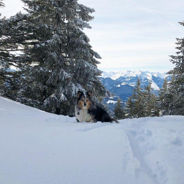 Easy im Glück 🍀 Wenn Herrchen frei hat und Schnee liegt, darf Easy ...