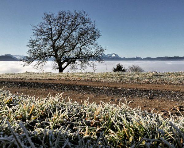 #viewpoint #landscapephotography #landscape #landschaftsfotografie #view #visitvorarlberg #visitaustria #365austria #photography #photoshoot #winter #frozen❄️ #traumtag ...