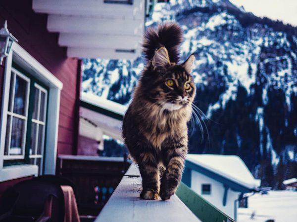 Hat man Instagram überhaupt jemals richtig genutzt, wenn man kein Katzenbild hoch geladen ...