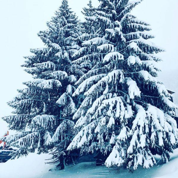 #snow #winter #naturephotography #nature #naturelover #tree #winterwonderland #landhauslackner2001 #urlaubbuchen #ländle #klostertal #auszeit #walking ...