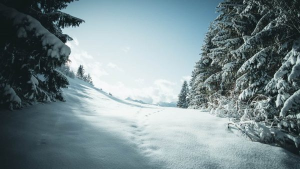 Winter in Raggal, Österreich. Die Schneewanderung hat sich gelohnt! #winter #snow #forest #trees ...