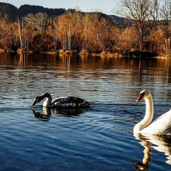 Beautiful Nature ° ° ° #NATUREPHOTOGRAPHY #naturelover #brederis #visitvorarlberg #visitaustria #2020 #lake #huawei ...