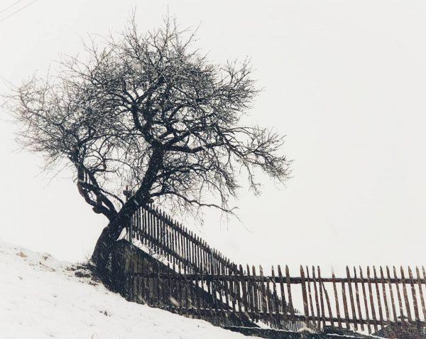 Winter impression #winter #wintertime❄️ #austria🇦🇹 #visittirol #tirol #vorarlberg #montafon #gaschurnmontafon #gaschurn #silvrettamontafon #trees ...