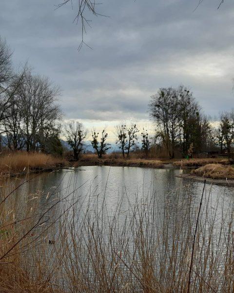 #visitvorarlberg #lake #vorarlberg #austria_official #austriagram #austria_pictures #ww_natura #ww_nature_landscapes #natura #natureyourebeautiful #nature_lovers #naturephotography #nature_perfection ...