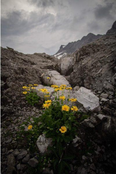 Nature is amazing. #vorarlberg #landscapes #naturelover #wanderlust #igerssalzburg #totalp #moodygrams #awakethesoul #gurushots #austrianroamers #photography #earthoffical #awesomeglobe #exploretocreate...