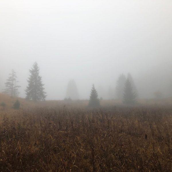 Der Nebel am Muttersberg zaubert zwischen die Bäume und die bunte Natur eine ...
