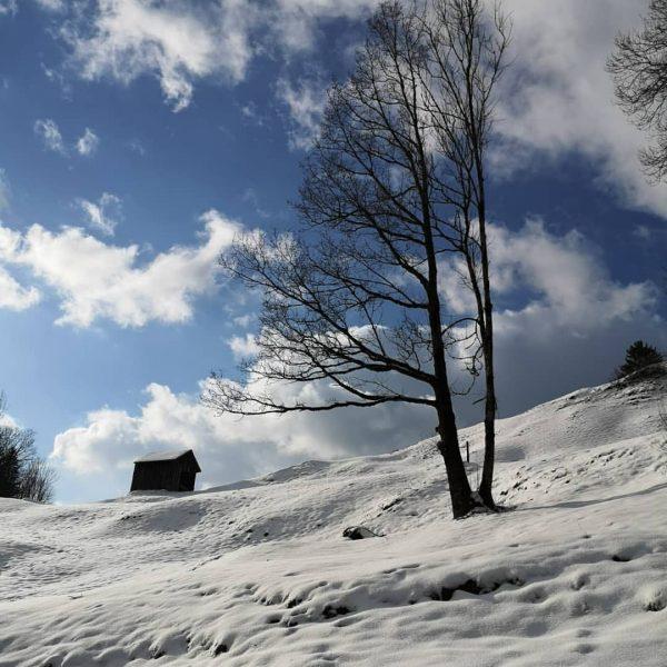 #lingenau #dahoam #visitbregenzerwald #visitvorarlberg #visitaustria #derwinterkommt #winteriscoming #wintertime #winter #winterwanderung #landschaft #landscape #landschaftsfotografie ...
