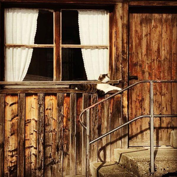 #schwarzenberg #eschgang #bregenzerwald #vorarlberg #austria🇦🇹 #visitbregenzerwald #wälderhaus #katze #cat #catsagram #sunnyday #idylle #architecture ...