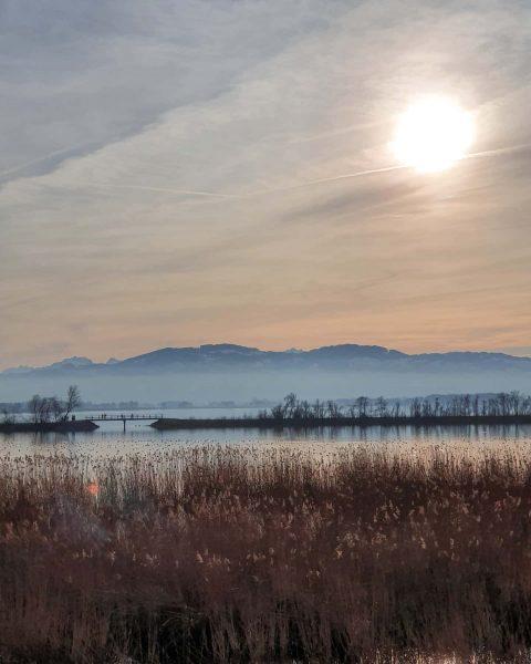 Unspoilt nature at nature reserve Rheindelta 🌿. . Das wunderschöne, frühlingshafte Wochenende lud ...
