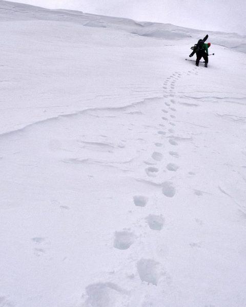 #skitour #brandnertal to #schesaplana #vorarlberg . . . #skimountaineering #agameoftones #tinypeopleinbigplaces #hellofrom #ourplanetdaily ...