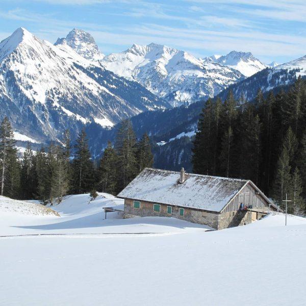 Kanisfluh Teil 1 Höhe: 2044 m #wandern #winter #winterwonderland #steinbock #gams #kanisfluh #mellau ...