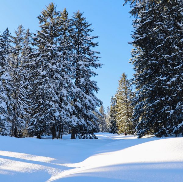 Magical winter walks in Oberlech ❄️ ❄️ ❄️ ❄️ ❄️ #instasnow #tirol #nicenature ...