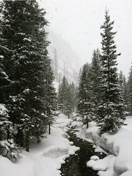 Actually color photography... . . . . . #snow #snowfall #alps #alpine #lech ...