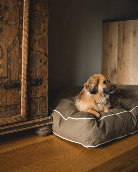 Puppies welcome 🐶 Our concierge services include dog walks, chef meals, comfy beds ...