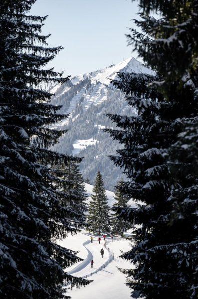 Winterwandern ist herrlich, besonders auf sonnigen Wegen wie dem Panoramaweg vom Söllereck nach ...