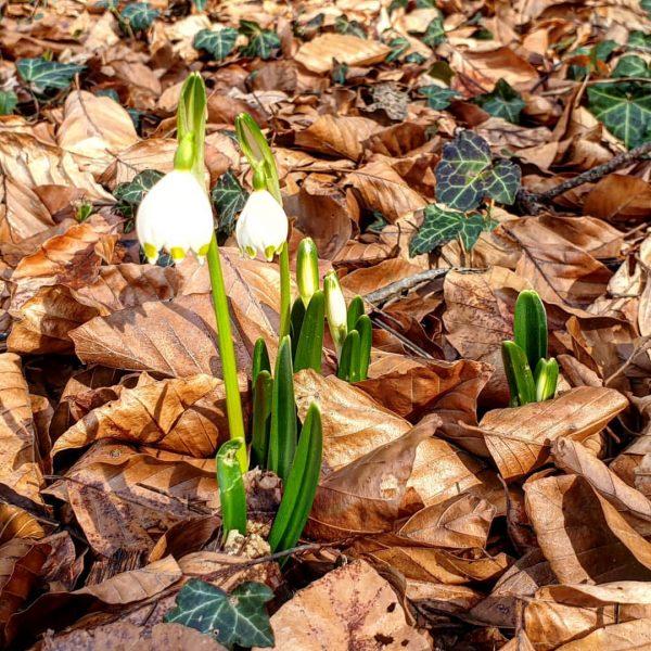 Sieht mal super nach Frühling aus. 😏🌞 Wallfahrtskirche Sankt Arbogast