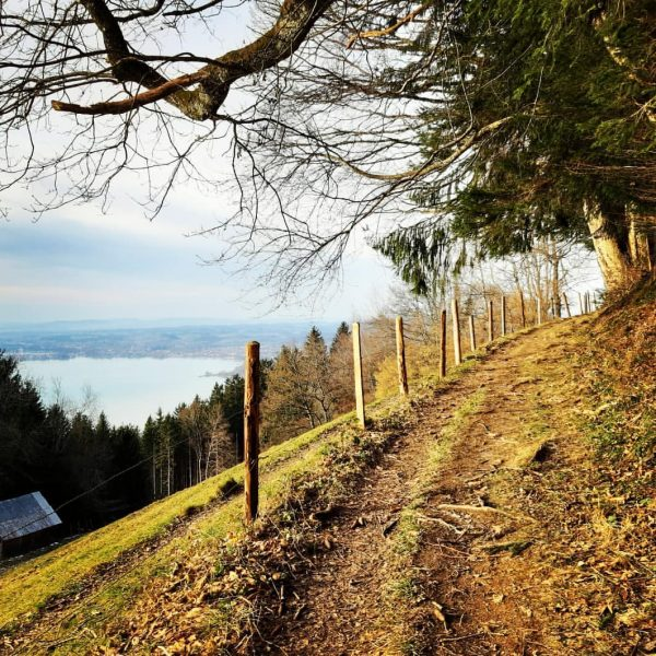 Bei Traumwetter uf da Pfänder! #pfänder #visitvorarlberg #bergpartnervorarlberg #bergpartner #enjoyaustria #vorarlberg #yourguidetothemountains #bergwanderführer ...