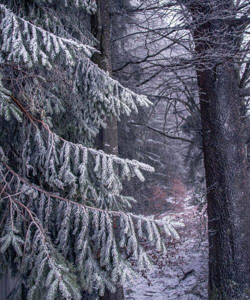Photo: @luis.pics #bregenz #vorarlberg #österreich #bodensee | #vlbg #austria #pfaender #pfänder #snow #nature ...