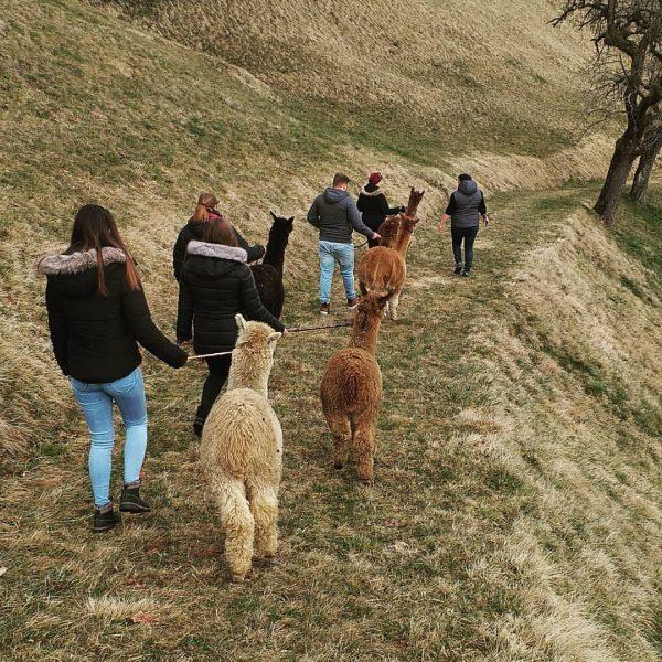Unsere heutige Trekkingtour. www.holzmichlsalpakas.at #alpaka #holzmichlsalpakas #alpakatrekking #alpakadecke #thüringerberg #alpakawolle #feinstewolle #vorarlberg Holzmichl's ...