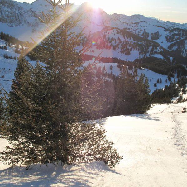 Kanisfluh Teil 2 Höhe: 2044 m #wandern #winter #winterwonderland #steinbock #gams #kanisfluh #mellau ...