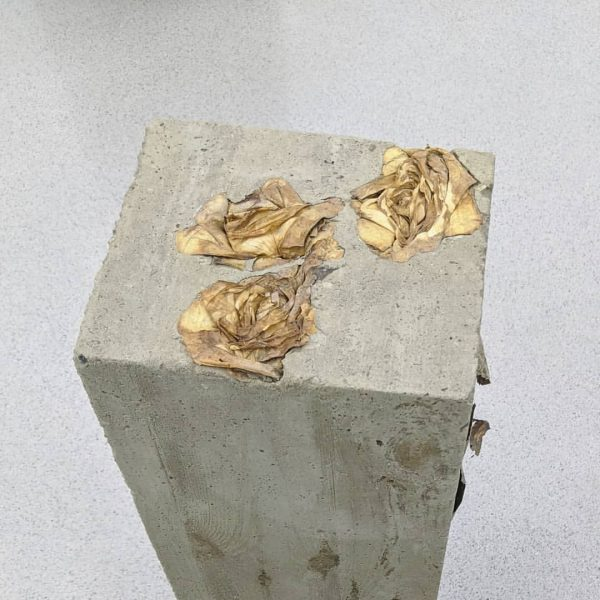 roses cast in concrete #art #bunnyrogers Kunsthaus Bregenz