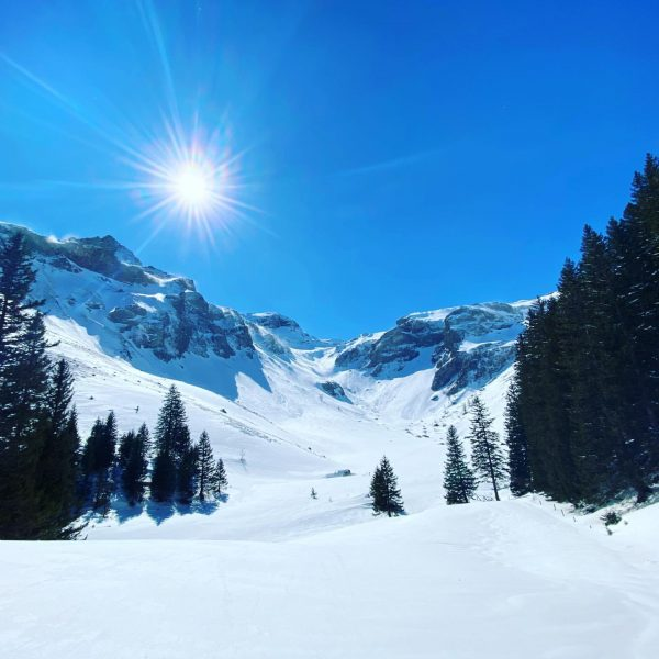Winterwonderland...... #winterwonderland #sun #bluesky #justbeautiful #up #touring #freeride #skiing #skimountaineering #snow #winter #nature ...