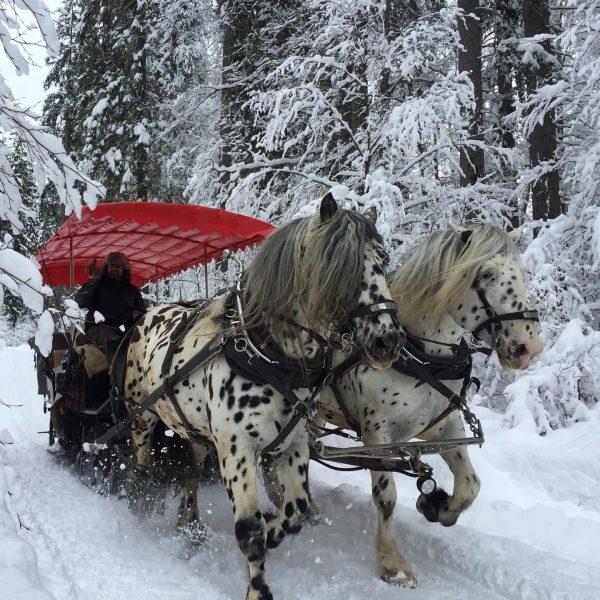Wenn die Märchenkutsche mit Prinz Peter mal so ebend vorbeikommt #pferde #pferdeschlittenfahrt #kleinwalsertal ...